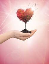hand holding soil and a tree in the shape of a heart with flying birds