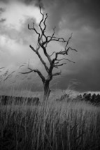 Dead tree in tall grass during storm.