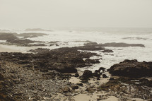 tide pools on the shore