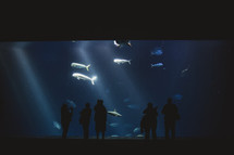 Silhouette of people at dolphin tank.
