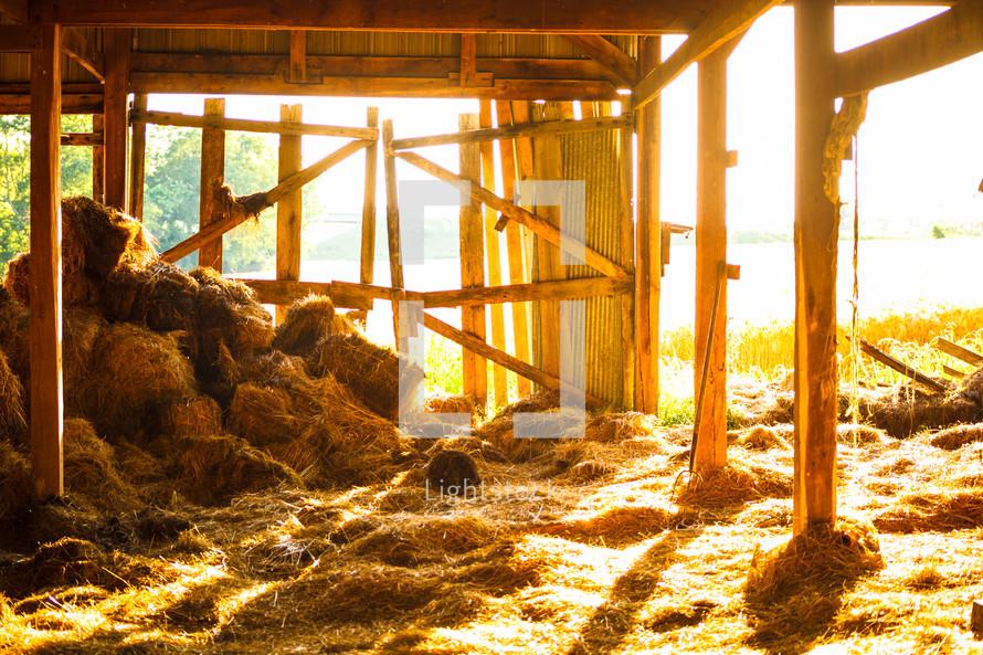 hay in a barn