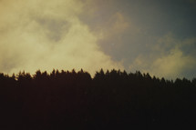 Sky and forest silhouette | Grunge Look | Background