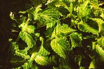 green leaves in a garden