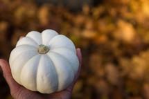hand holding a white pumpkin