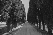 a gravel driveway lined with trees in Italy