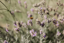 a bee hovering over wildflowers