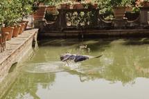 cranes splashing in a fountain