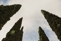 tops of trees in Italy