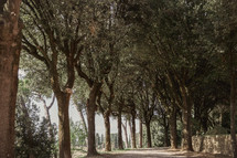 tree lined gravel driveway in Italy