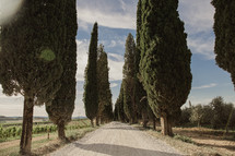 tree lined gravel road in Italy