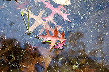 fall leaves in pond water