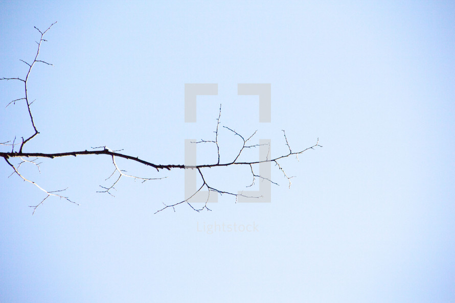bare branch against a blue sky