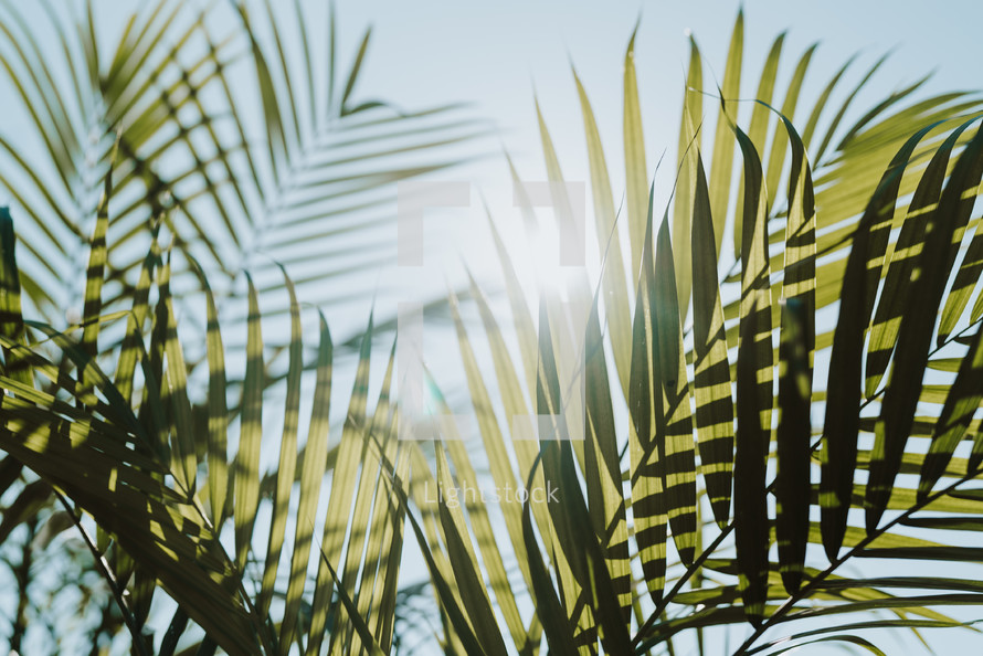 sunlight on palm leaves