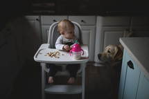 a dog watching a toddler in a highchair eating cheerios