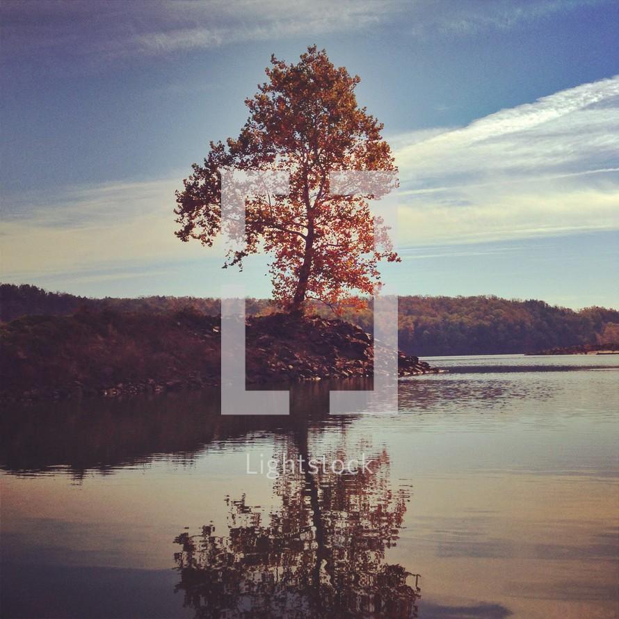 fall tree at the edge of a lake
