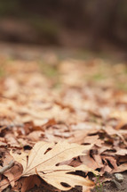 brown fall leaves on the ground