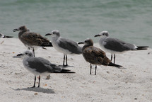 A group of seagulls on the beach