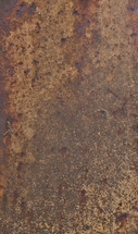 A mottled brown surface.