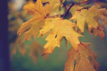 Fall foliage.
