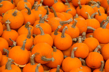 pile of orange pumpkins