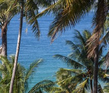 palm trees and ocean water