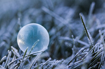 Frozen Bubble resting on Frosty Grass on a Winter's morning