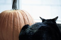black cat and an orange pumpkin