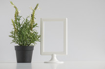 a house plant and white frame