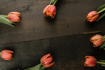 spring tulips on a wood background