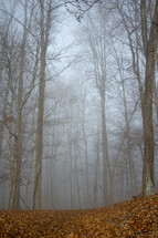 dense fog in a forest