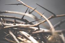 macro of a crown of thorns.