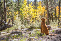 dog looking out at a forest