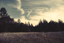 Clouds Touching Tree Tops | Sky | Forest | Shallow Depth of Field | Background | Camp | Retreat | Solitude