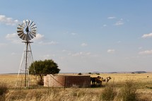 windmill on a ranch