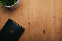 house plant and Bible