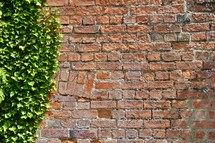 green ivy on a brick wall