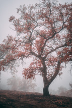 red fall leaves on a tree in fog