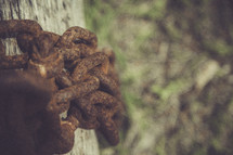 rusty chain on wood