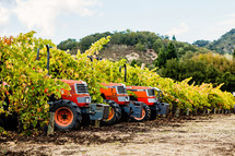 Orange Tractors in a vineyard fall napa valley harvest