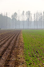 Misty day over half plowed field. Half power ready for seed and half planted and ready growing.