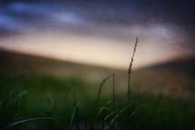 tall blade of grass