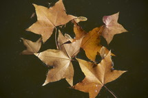 Fall leaves in water. Autum, season, brown.