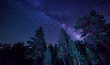 milky way in the night sky above the trees