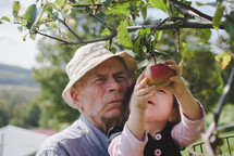 grandfather and granddaughter picking apples off a tree