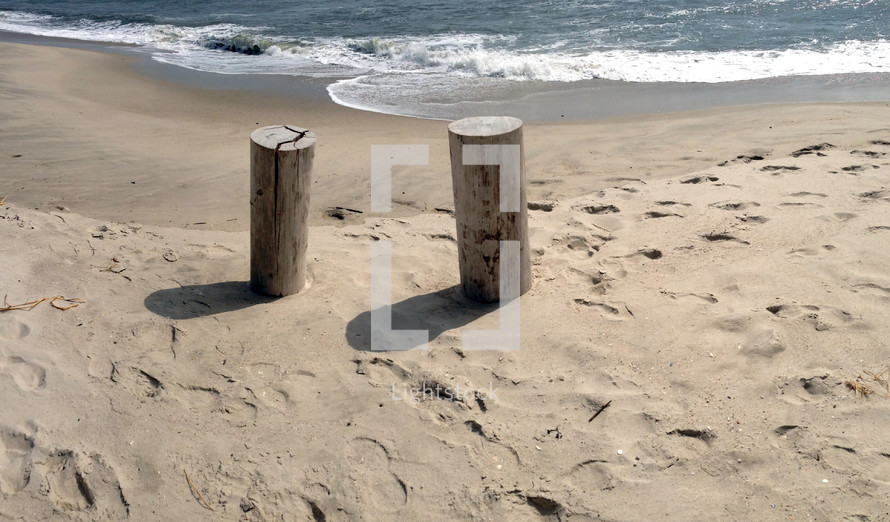 stumps on a beach