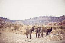 donkeys on desert road - mountains