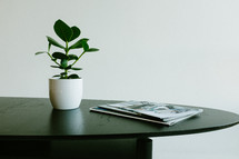 house plant and magazines on a table