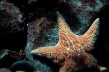 starfish on a rock