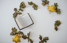 Bible and fig leaves