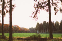 green grass in an open meadow